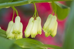 Blütenwelten