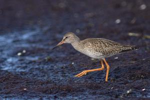 Vogelwelt vom Darss