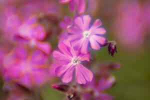 Minolta Rokkor 58 mm