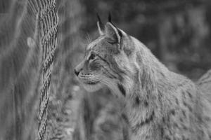 Mit dem NovoFlex im Tierpark Sababurg